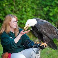 sitka-raptor_center.jpg