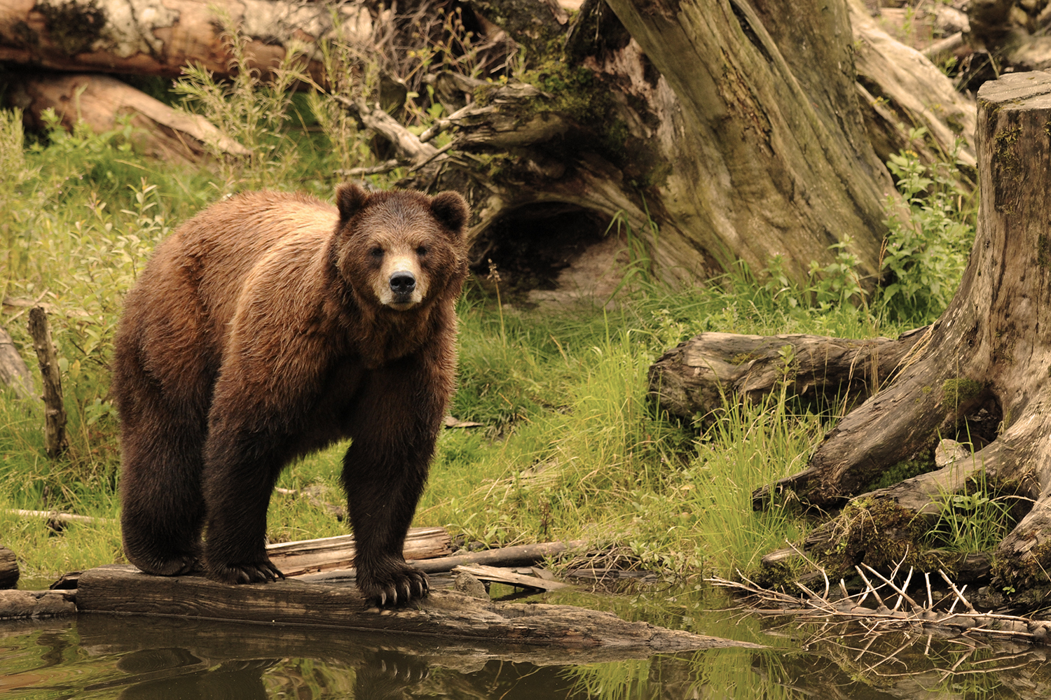 Best Of Sitka Tour Tours In Alaska