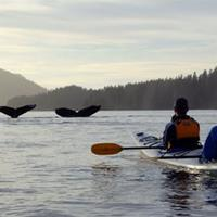 Kayakers and Whales